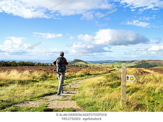 Mature male hiker on The Cleveland Way national trail near Captain Cook`s monument on Easby Moor, with Roseberry Topping in the distance