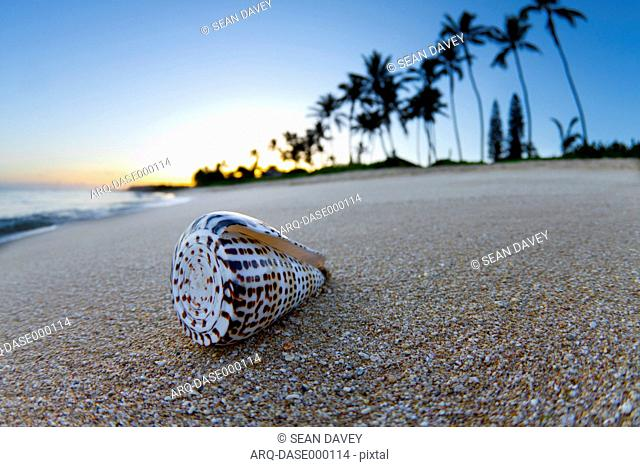 Close-up Of A Shell On The Beach During Sunrise In Hawaii