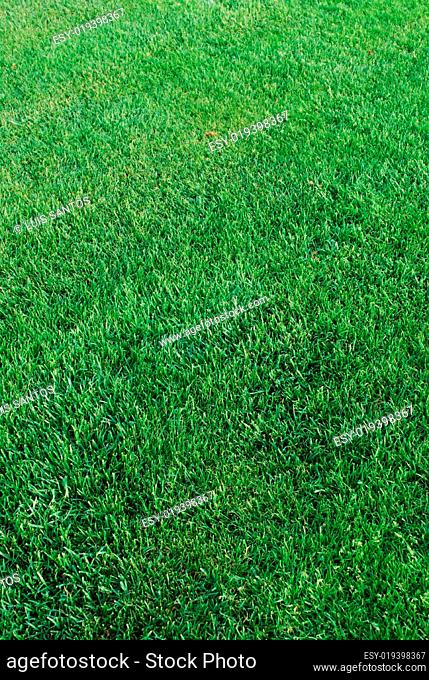 Green turf background