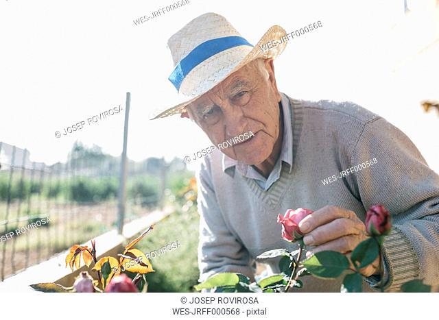 Portrait of senior man in the garden