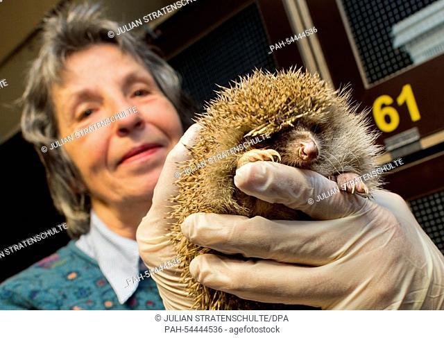 Heike Philipps, founder of the hedgehog centre, holds a hedgehog at the 'Aktion Tier Igelzentrum Niedersachsen' (Operation animal hedgehog-centre Lower Saxony)...