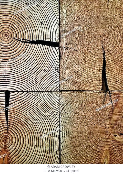 Close up of tree rings in wood logs