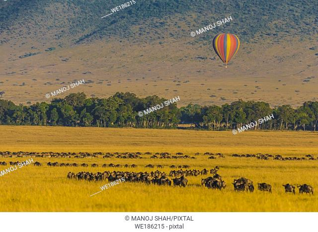 Masai Mara wildebeest migration and hot air balloon, Kenya