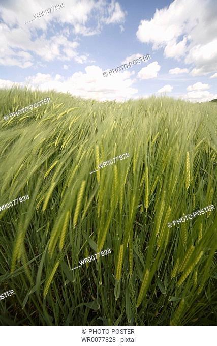 green grass on the fields