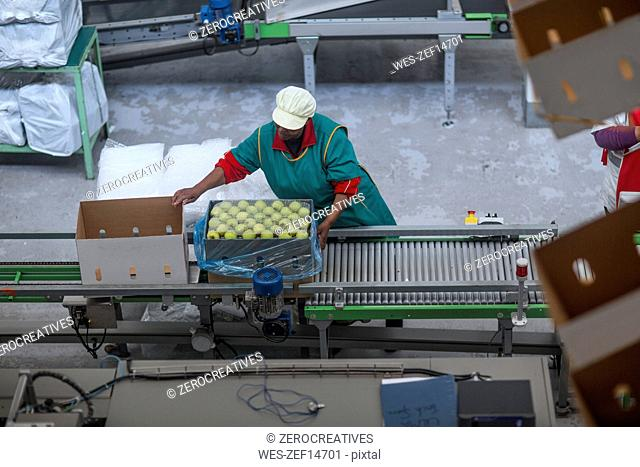 Woman factory packing apples in cardboard box