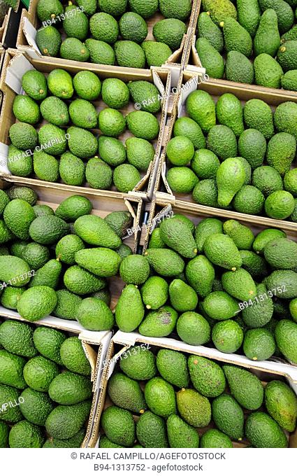 Avocados in a supermarket, France