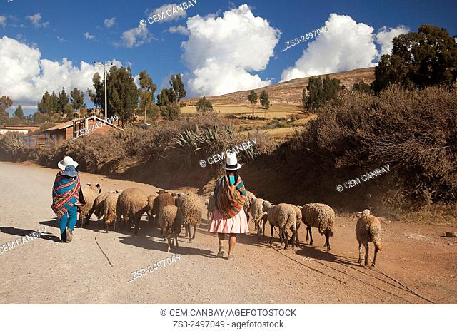 Indigenous women with a herd of sheeps in Sacred Valley, Cuzco Region, Peru, South America