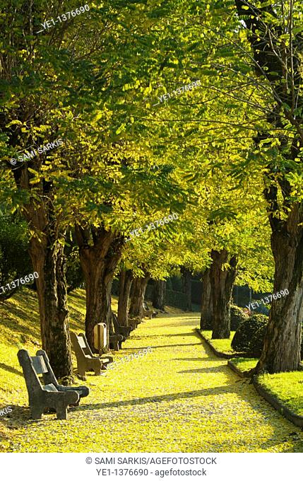 Path through a park, lined with park benches and autumn trees, Ruy, Isère, France