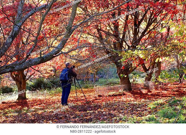 Photographer. Winkworth Arboretum. National Trust. Godalming. Surrey. England