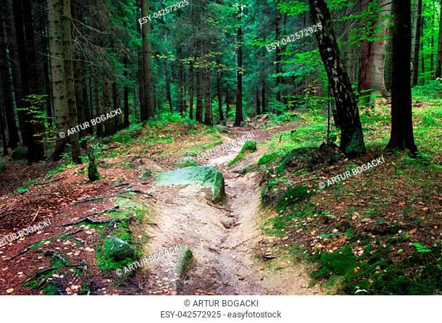Small footpath in fresh, natural environment of the forest, Karkonosze National Park, Sudetes, Poland