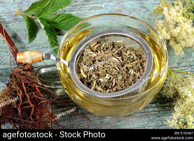 Cup meadowsweet tea (Filipendula ulmaria), meadowsweet, legume, honeysuckle, spikeweed, meadow queen, wild lilac, cramping herb, meadowsweet tea