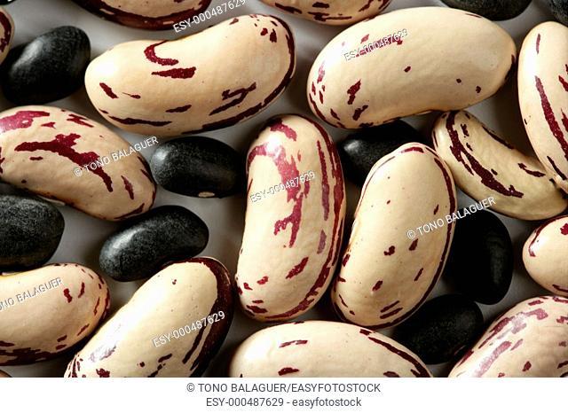 Dried beans macro at studio white background