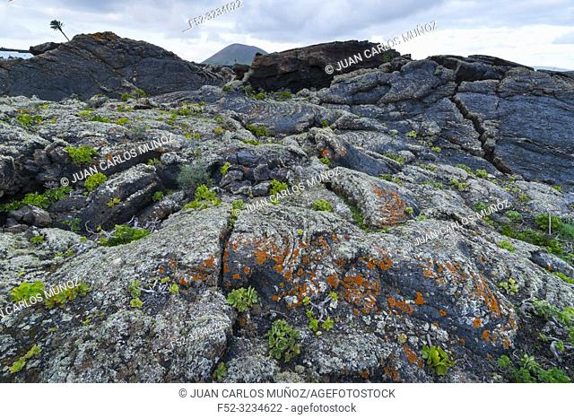 Bejeque, Lava field and lichens , La Geria, Lanzarote Island, Canary Islands, Spain, Europe