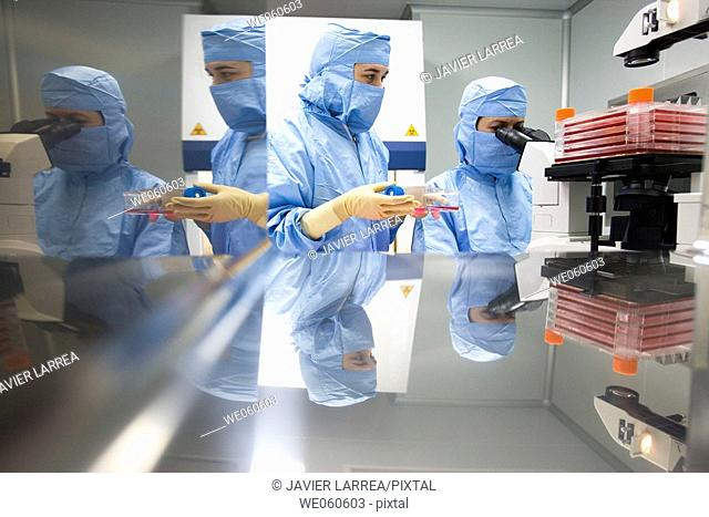 Clean room, culture observation through the microscope, biopharmaceutical lab, development and production of innovative drugs using adult stem cells, Cellerix