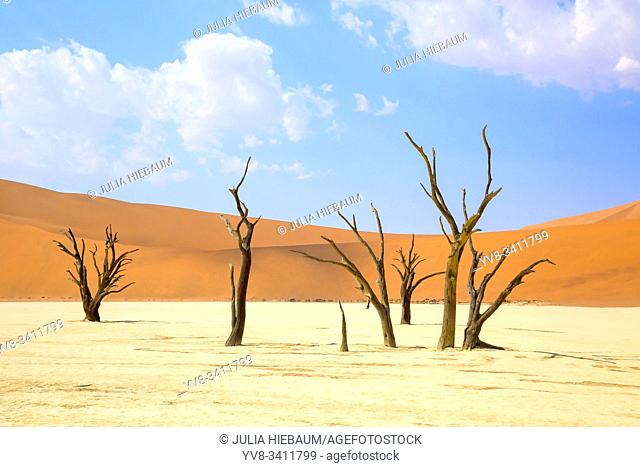 Camel thorn trees in Sossusvlei, Namibia
