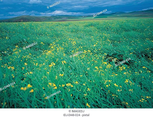 Green grass and yellow flower under cloudy sky