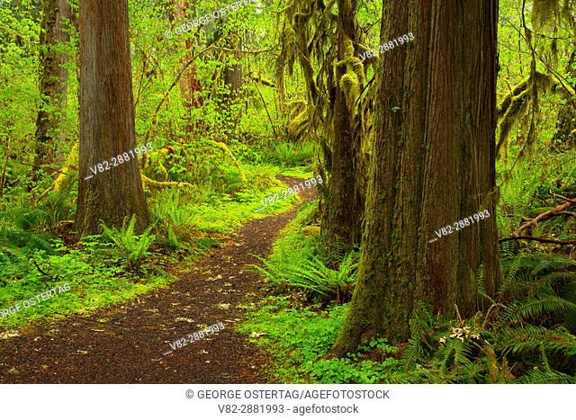 Delta Nature Trail, Willamette National Forest, Oregon