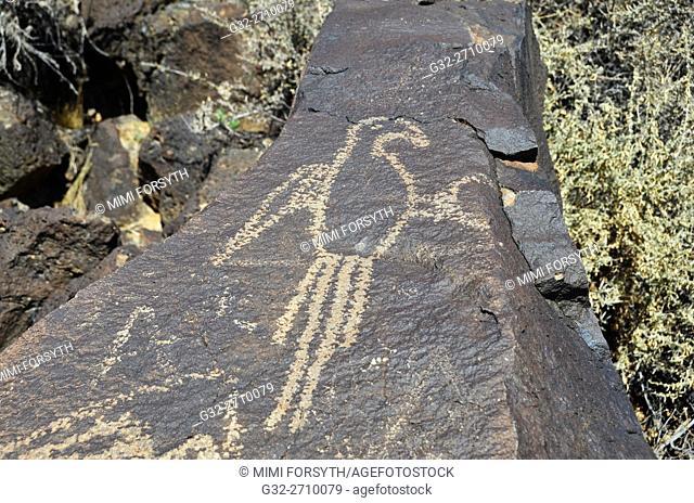 Macaw, Boca Negra Canyon, Petroglyph National Monument, Albuquerque, New Mexico, USA