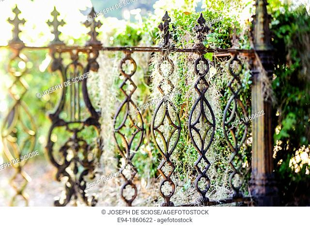 A detail of a wrought iron fence with spanish moss in a cemetery in Selma, Alabama