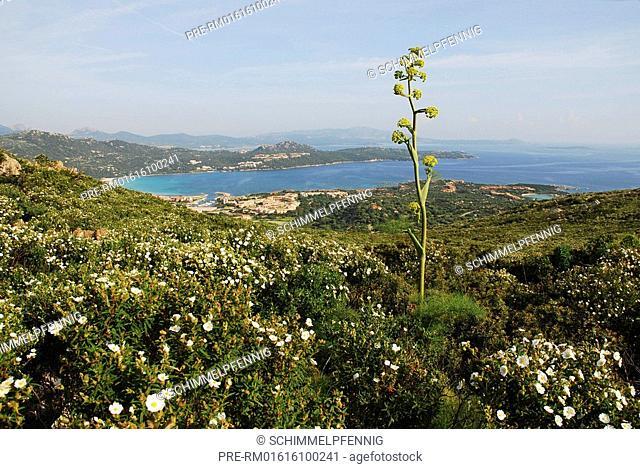 Bay near Golfo Aranci, Sardinia, Italy