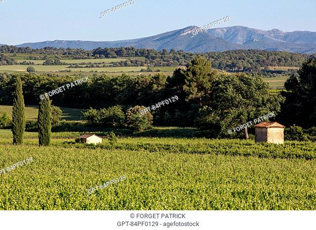 WINE-MAKER'S CABIN AND VINEYARD (WINE OF THE LUBERON) NEAR THE VILLAGE OF CABRIERES D'AIGUES, REGIONAL NATURE PARK OF THE LUBERON, VAUCLUSE (84), FRANCE
