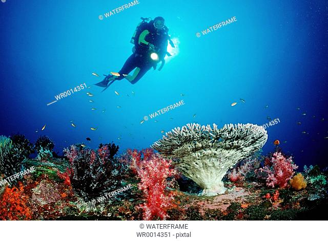 Coral Reef and Diver, Similan Islands, Thailand