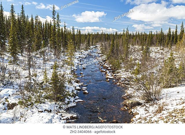 Muddus jokk in springtime with running water, snow on the side, spruce and birch trees around, Gällivare county, Swedish Lapland, Sweden