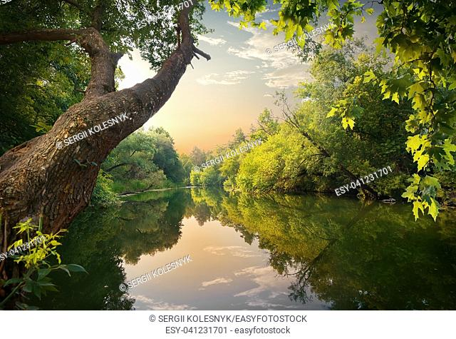 Evening on the river in the forest