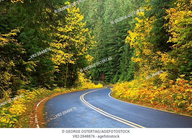 West Cascades Scenic Byway, Willamette National Forest, Oregon