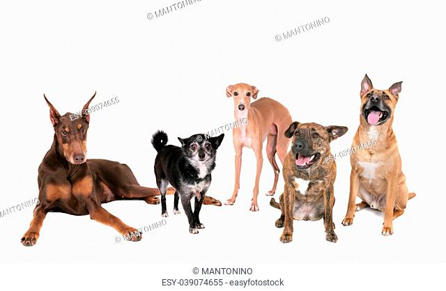 five different breed dogs sitting, standing or laying on a white background