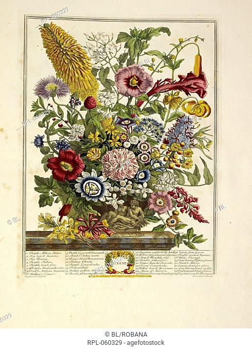 Various flowers August Author Robert Furber, Illustrated by Robert Furber