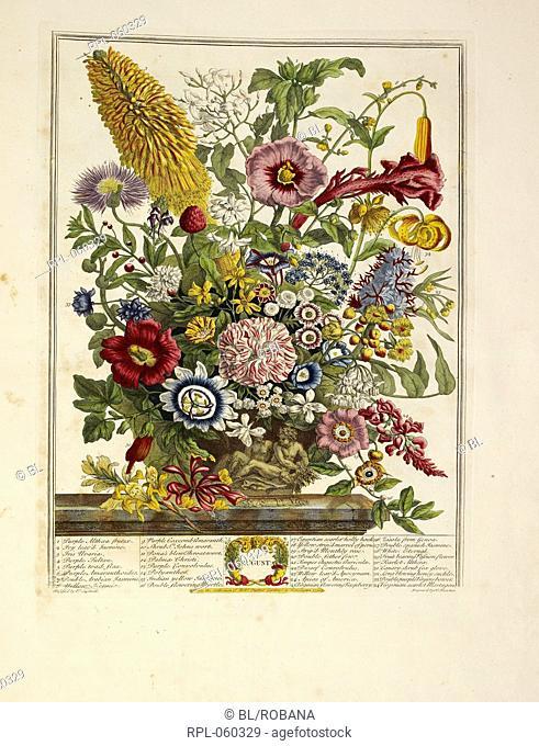 Various flowers August Author Robert Furber, Illustrated by Robert Furber