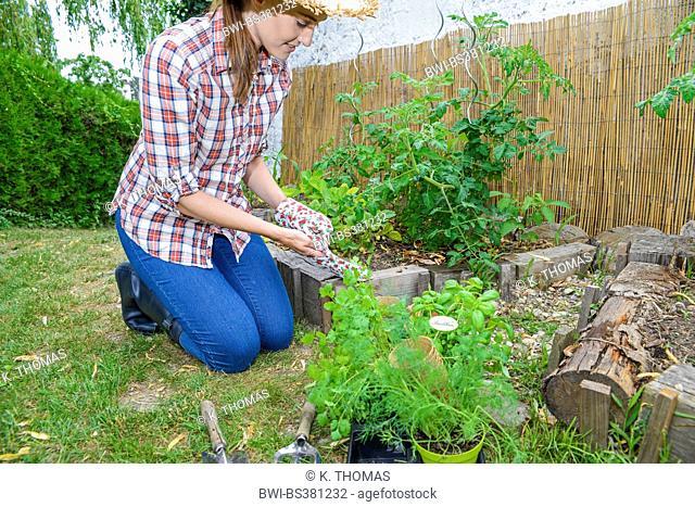 kneeing in the garden and putting on garden gloves, Austria