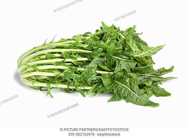 Fresh Puntarelle vegetable on white background