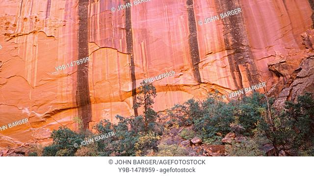 Fall-colored shrubs, oak and pine trees beneath sandstone walls streaked with minerals called desert varnish, Long Canyon