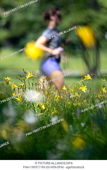 17 May 2019, Baden-Wuerttemberg, Stuttgart: A jogger walks past a meadow with yellow lilies in the castle park. Photo: Fabian Sommer/dpa