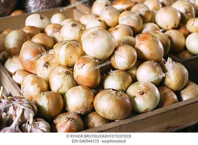 Close View Of Mature Bulb Onions Of New Crop Packed In Bulk In Wooden Box For Sale At Market Bazar