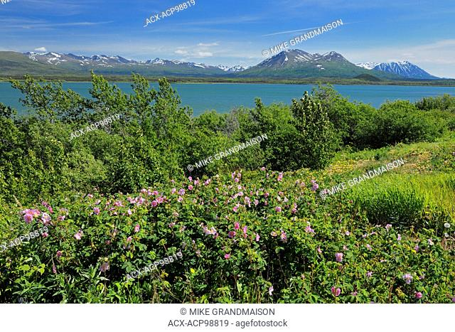 Deasadeash Lake near Haines Junction Yukon Canada