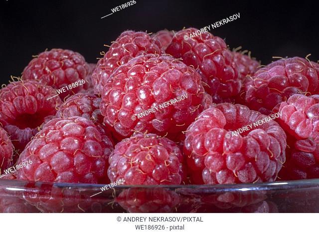 Close-up of European raspberry or red raspberry (Rubus idaeus) on black background