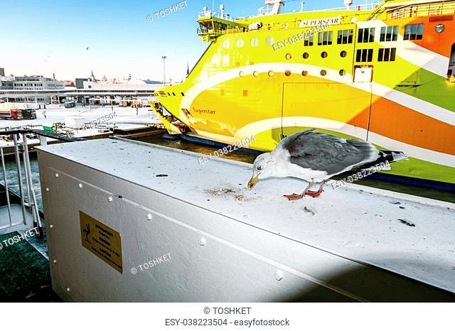 "January 6, 2016.Tallinn.Seagulls against the ferry of company """"Tallink"""". Estonia"