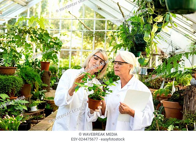 Scientists examining potted plant at greenhouse