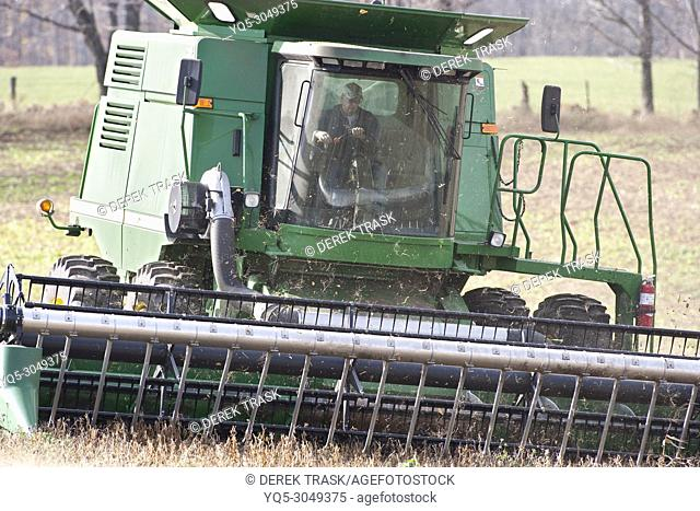 farmer harvesting soybeans with combine, Canada, Ontario