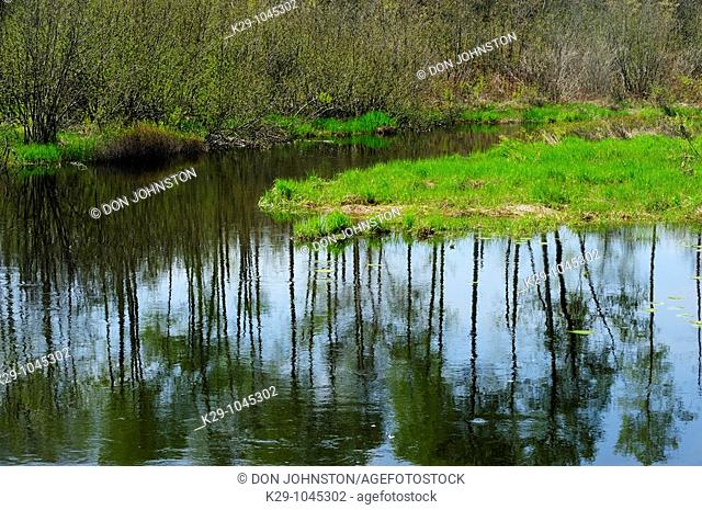 Fairbank Creek with tree reflections
