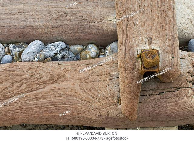 Groynes, abstract view of rusty bolt and pebbles stuck in weathered timber, West Runton, Norfolk, England