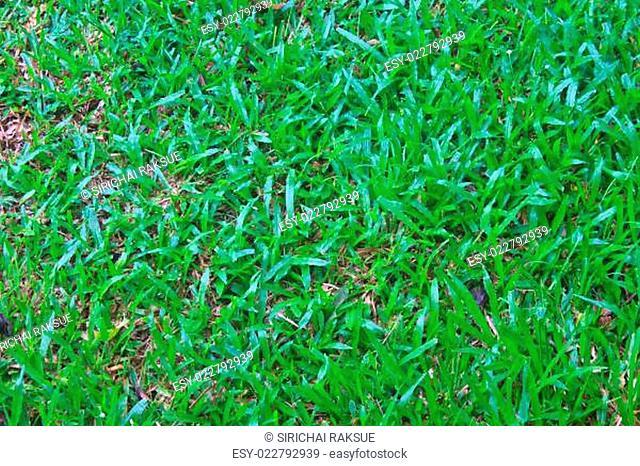 Green grass field background texture