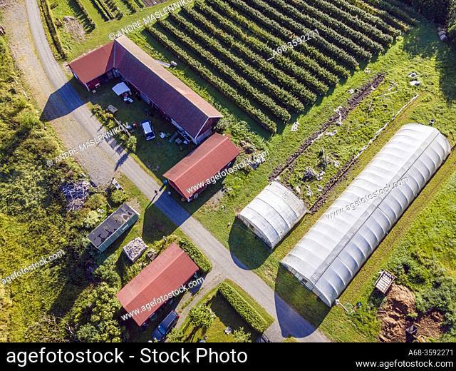 Cultivation of organic vegetables, raspberries, currants, gooseberries, flowers, etc. for self-picking. Sweden. Photo: André Maslennikov