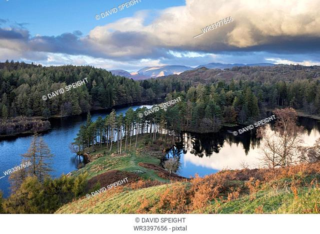 Autumn colours and low angled evening sunlight at Tarn Hows, Lake District National Park, UNESCO World Heritage Site, Cumbria, England, United Kingdom, Europe