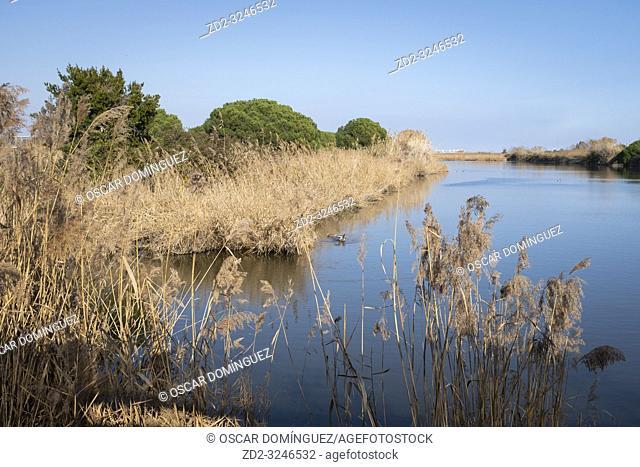 Water body surrounded by reeds at La Vidala. Natural Areas of Remolar-Filipinas. Barcelona province. Catalonia. Spain
