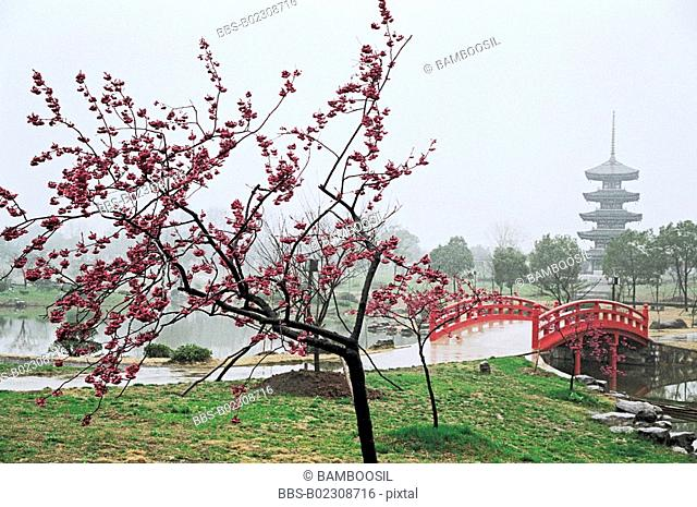 Tree by bridge, Meiyuan sight of the East Lake, Wuhan City, Hubei Province, People's Republic of China