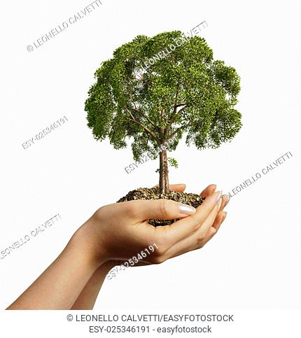 Woman's hands holding soil with a tree. Viewed from a side, on white background